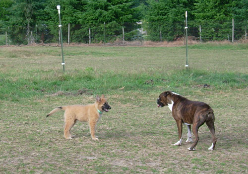 Puppy-Hanna-2.jpg