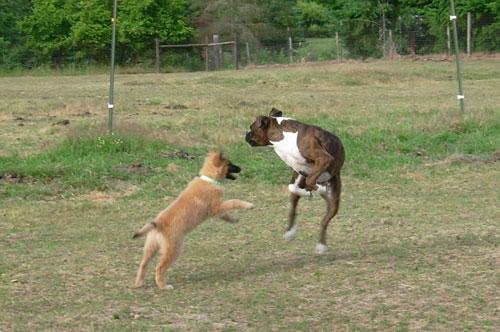Puppy-Hanna-3.jpg