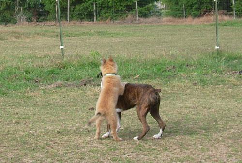 Puppy-Hanna-4.jpg