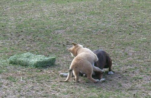 Puppy-Hanna-5.jpg