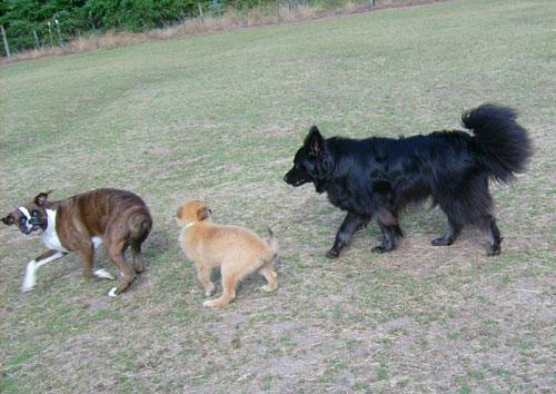 Puppy-Hanna-7.jpg
