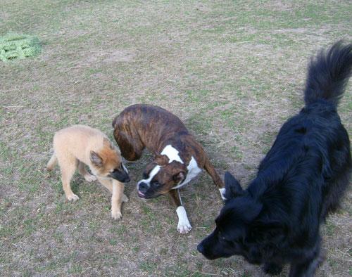 Puppy-Hanna-Kylie2.jpg