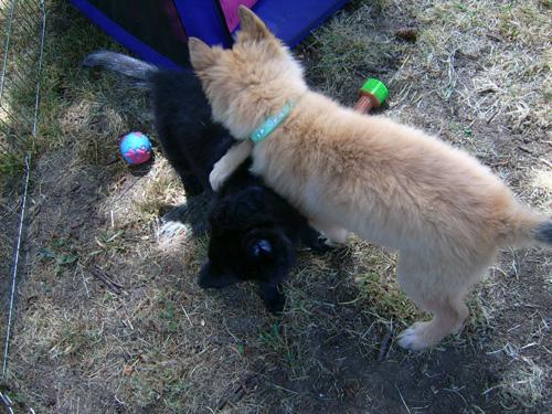 fight-puppy.jpg