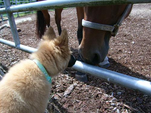 hi-pony.jpg