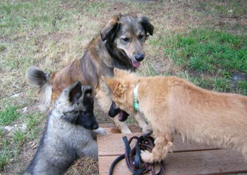 Savannah, Percie & Harry