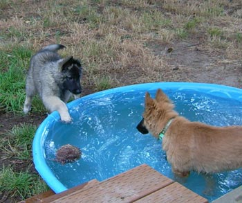 Savannah & Percie in Pool